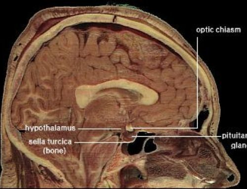 'The Pill' Might Shrink Certain Brain Regions Among Women Taking It